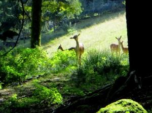 Joggingtour am 18.09.2014 im Bayerischen Wald von Unterried �ber Mais nach Frath